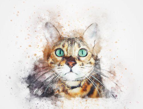 Bożena Czarnota – Dobrze mieć kota