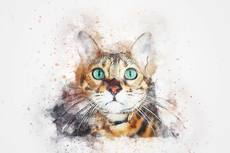 Bożena Czarnota - Dobrze mieć kota; Czyta #TataMariusz