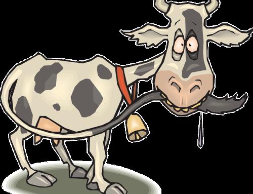 Dorota Frątczak – Krowa