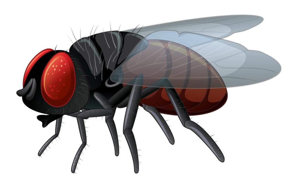 Dorota Frątczak - Lep na muchy; Czyta: #TataMariusz