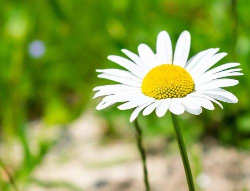 Hans Christian Andersen – Polny kwiatek