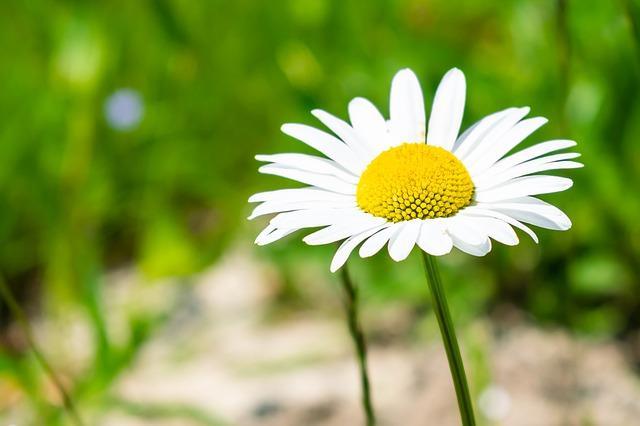 Hans Christian Andersen - Polny kwiatek; Czyta #TataMariusz