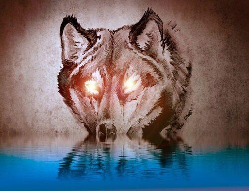 Bracia Grimm – Wilk i człowiek