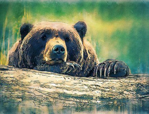 Joanna Papuzińska – O niedźwiedziu królewiczu